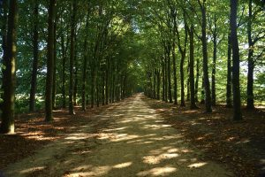 Paths Trees Greenery Forests Parks Pathways